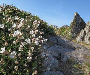Flore des monts d'Arrée