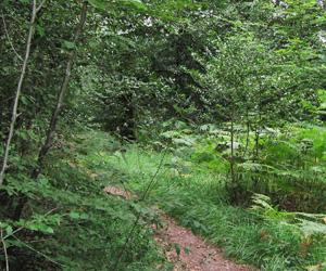 Sentier dans la forêt de Rennes