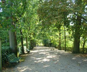 Allée arborée dans le parc du Thabor
